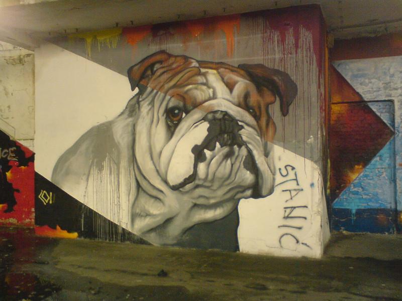 210- Bulldog