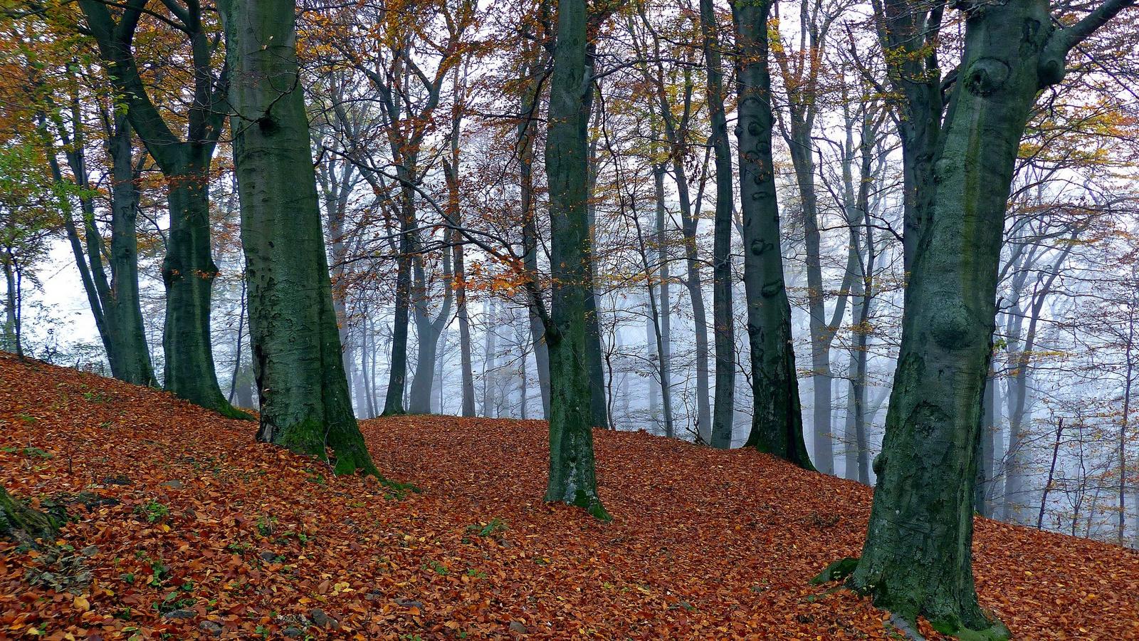 Ködös erdő I.