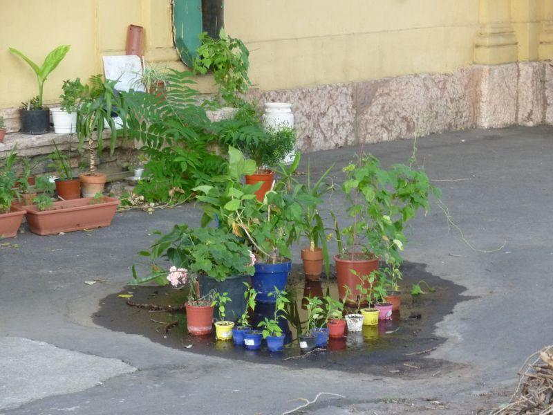 Növénypark