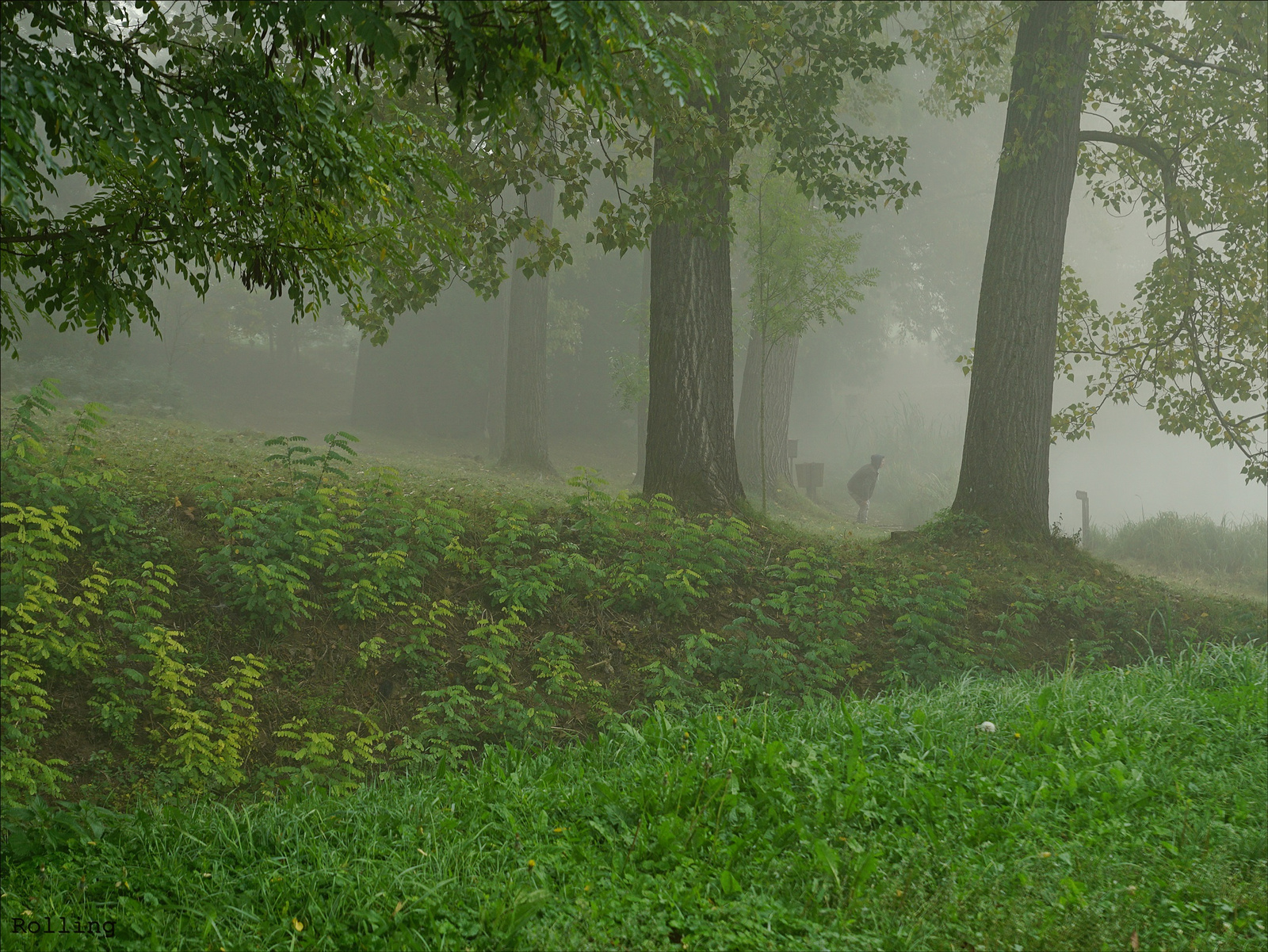 Parti köd.