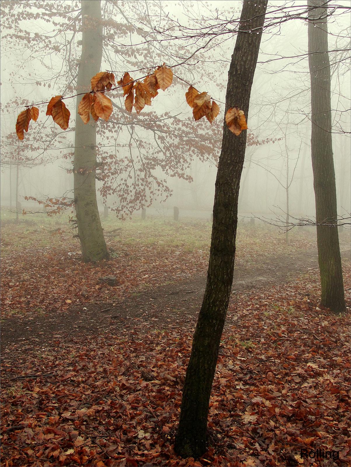 Ködben.