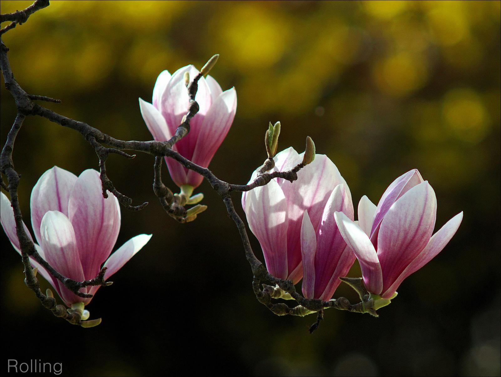 Tavaszi virágzás.