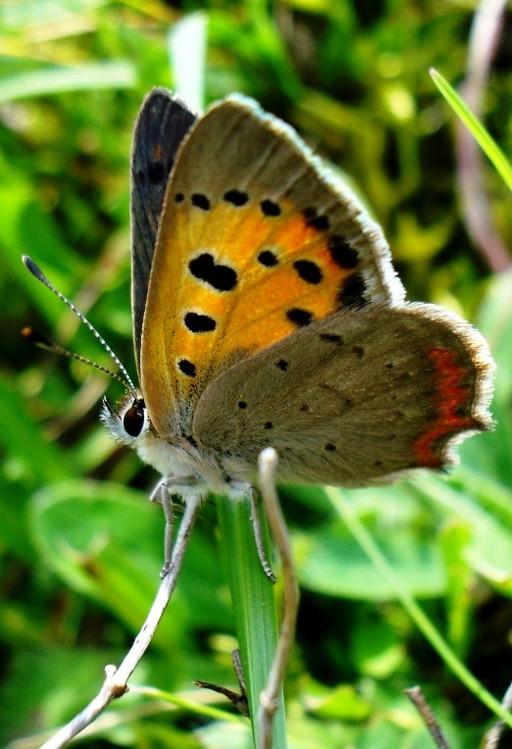 Szép pillangó:)
