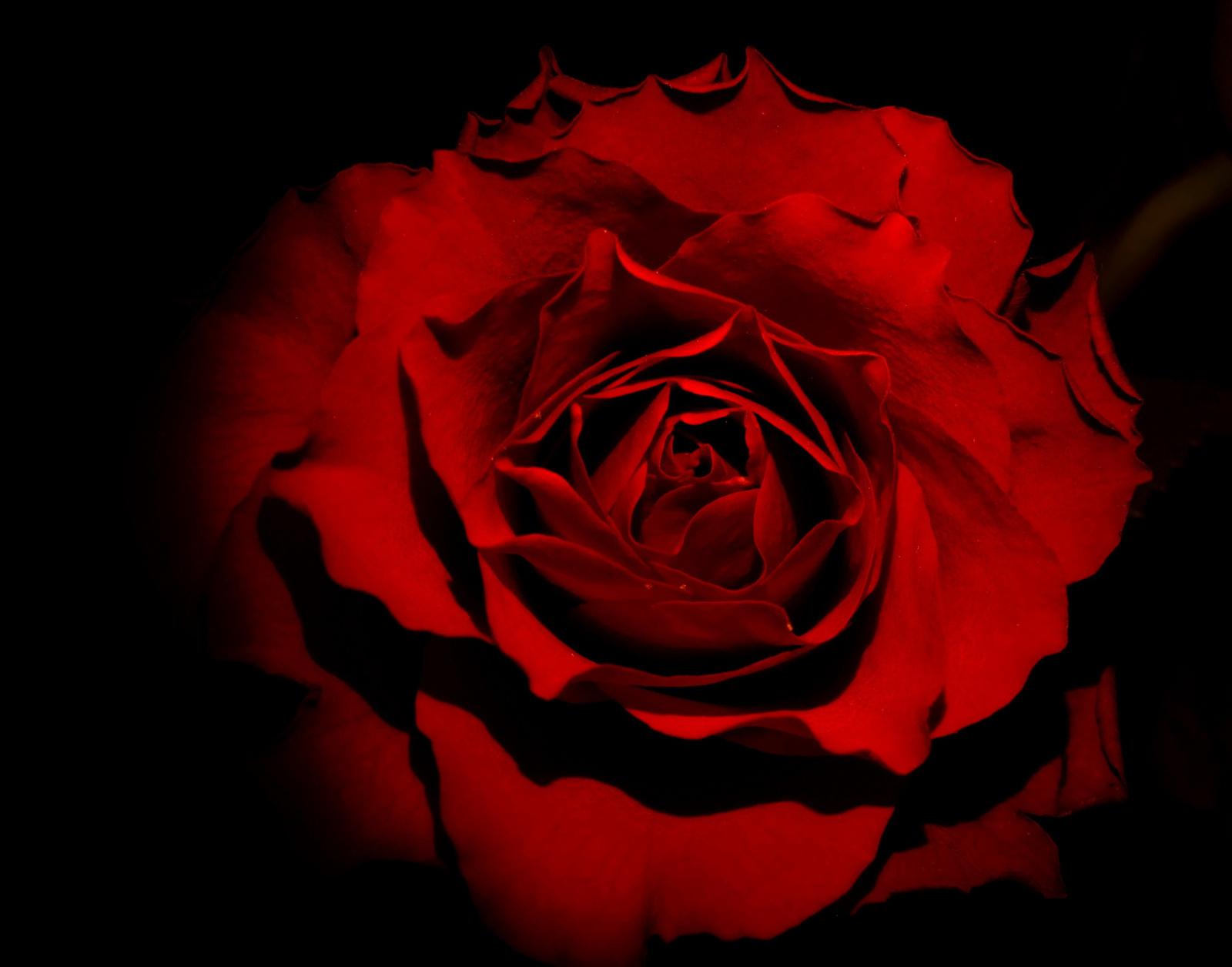 rózsi