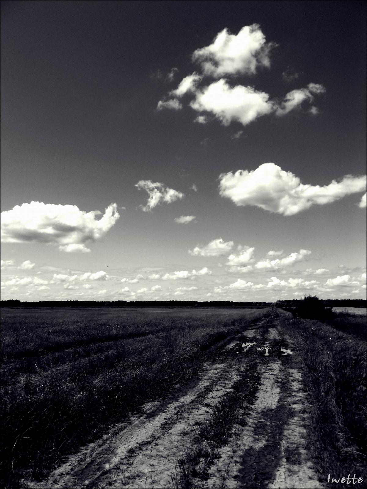 Út (fekete-fehér)