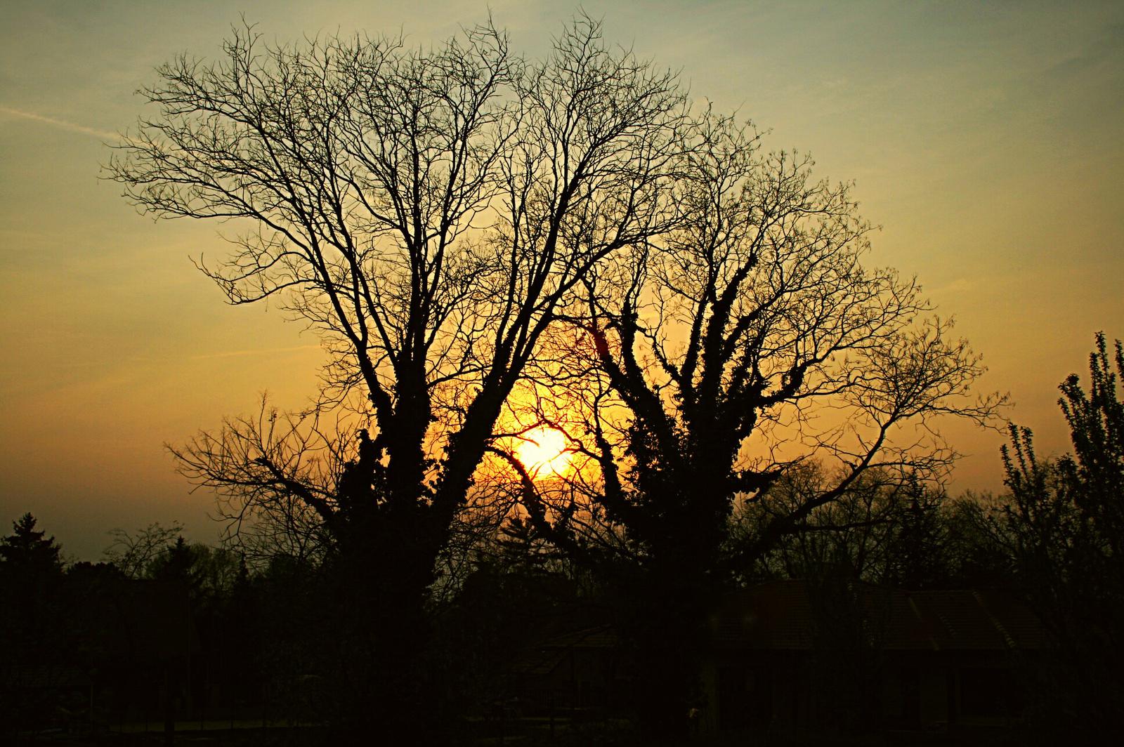 Requiem a fákért