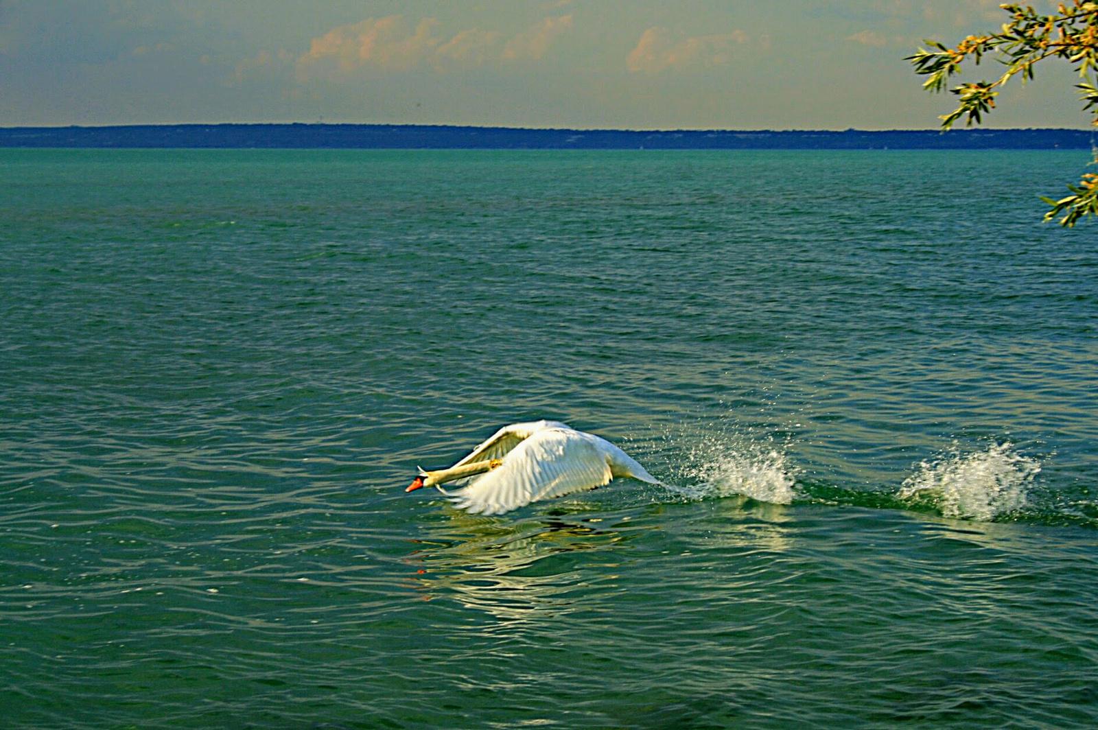 Vízen futás