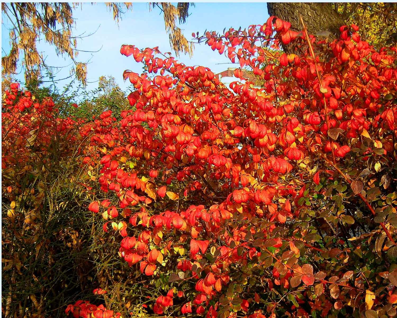őszies levelek