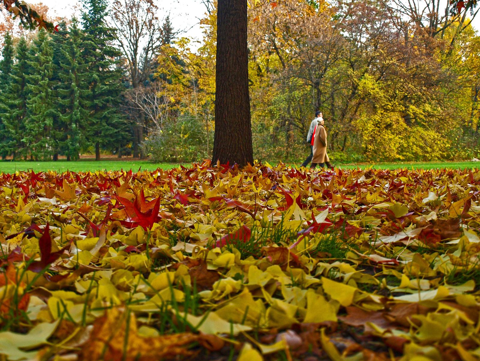 vegyes levelek