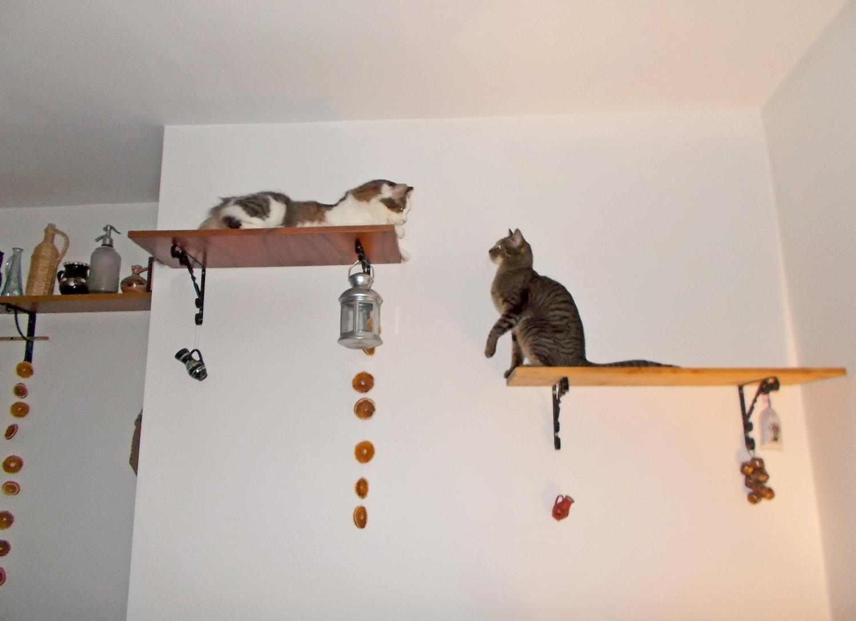 macska terefere - nem saját fotó!!