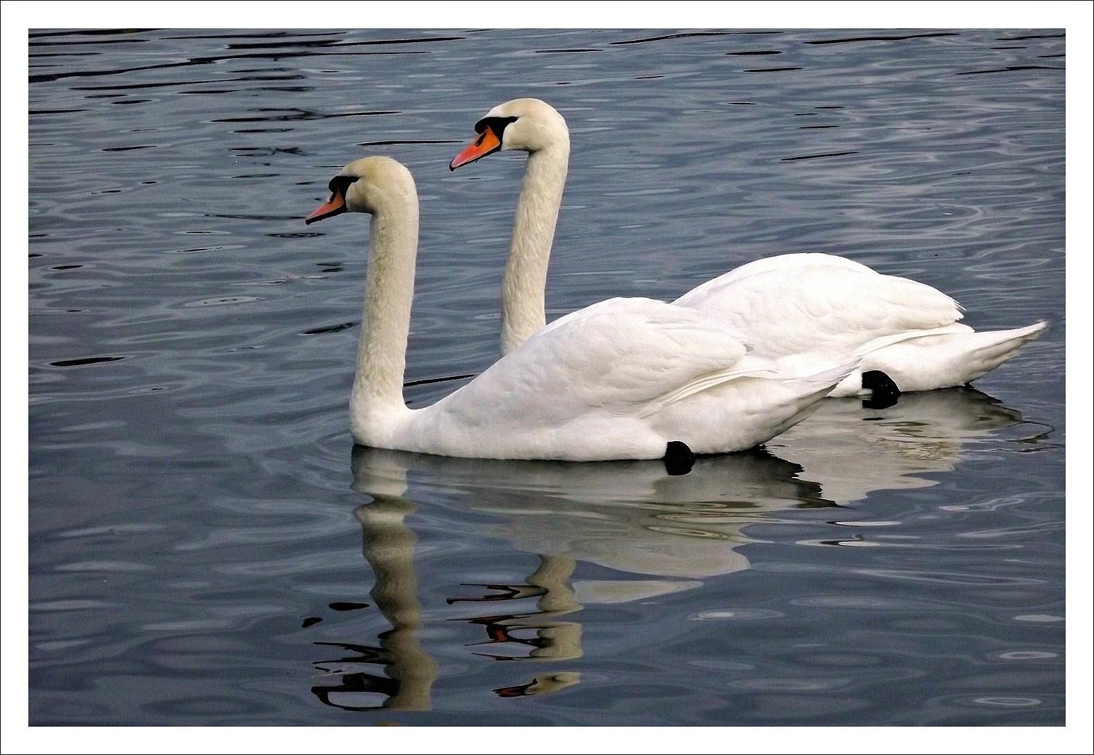 Úszó páros