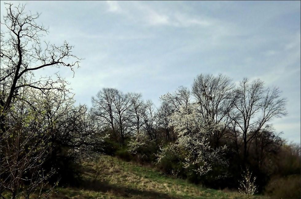 Virágzó domboldal