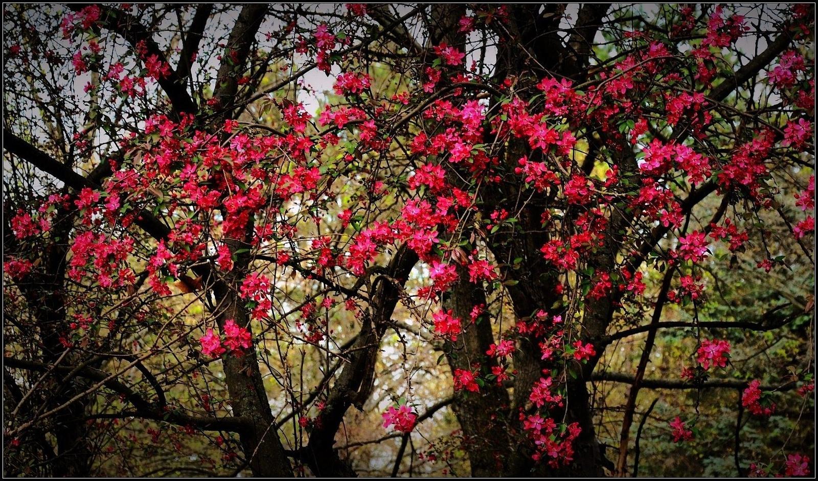Csupa virág