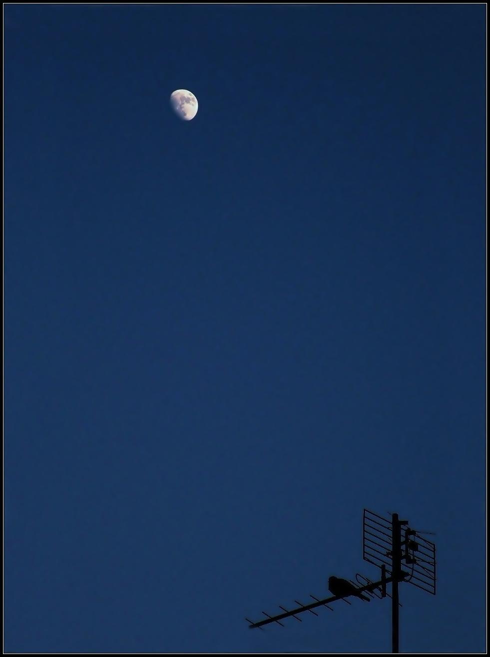 Hold és a kismadár
