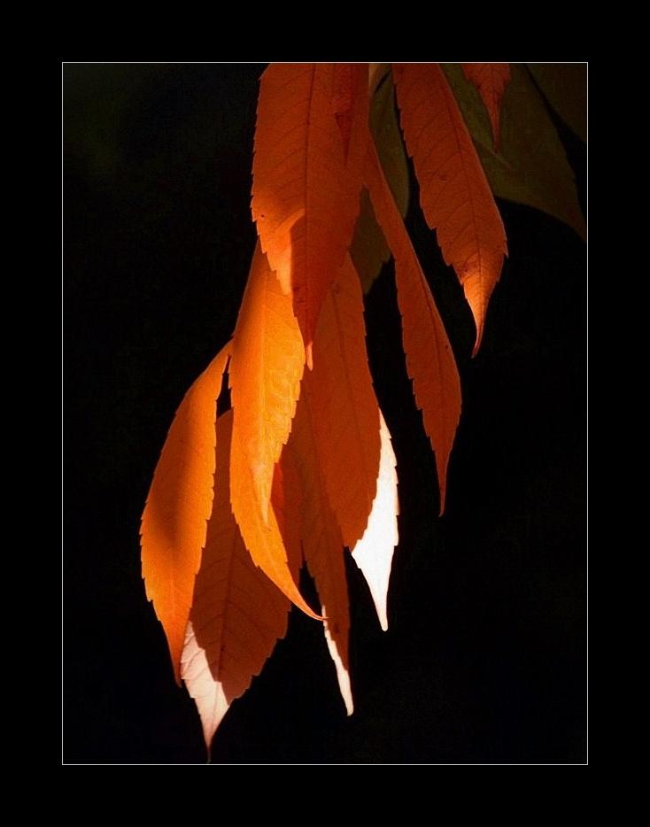 Ablak az őszre 2.