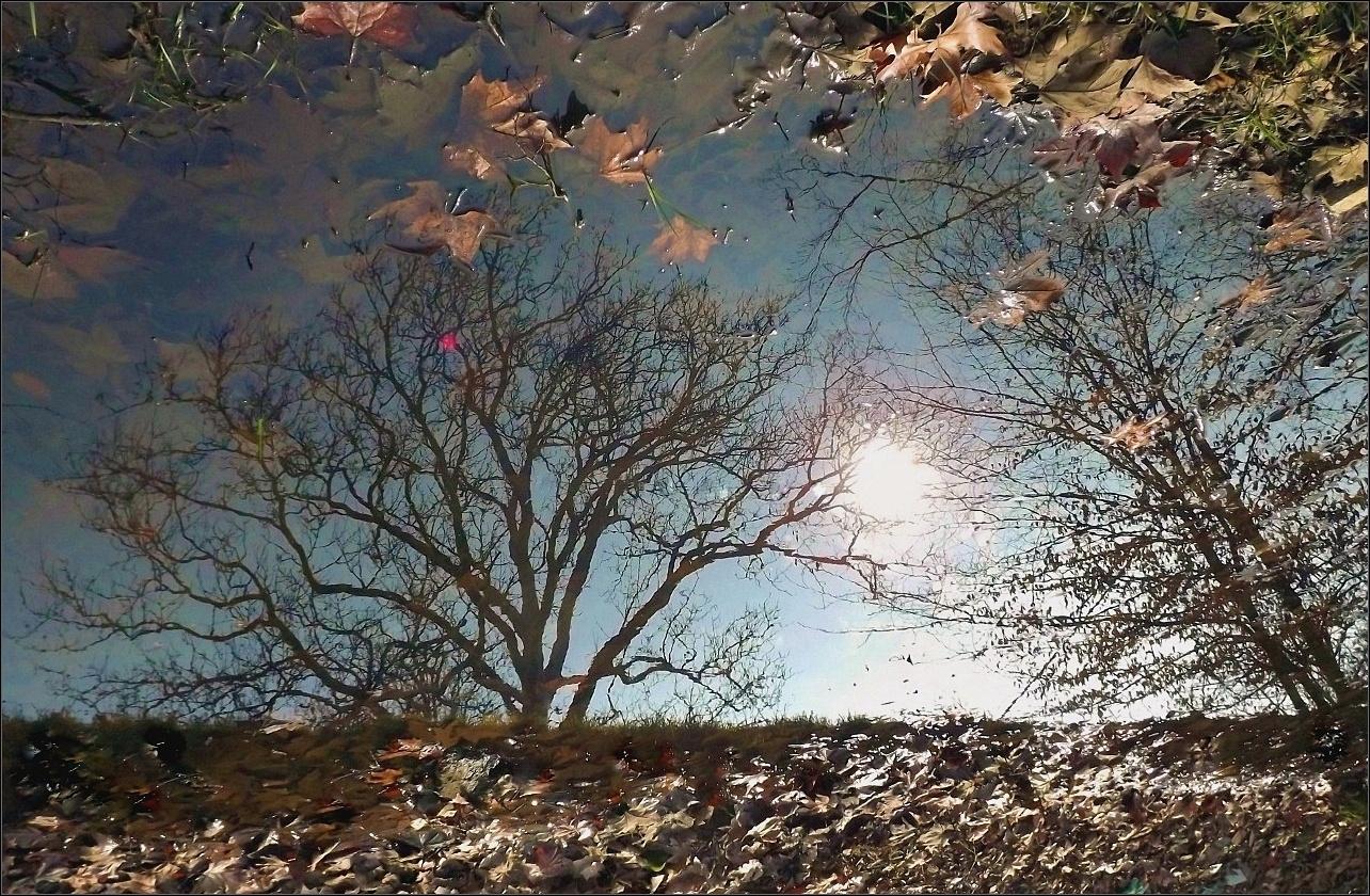 A természet tükre