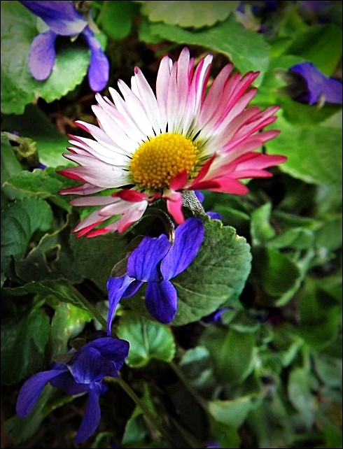 Virágom,virágom...4.