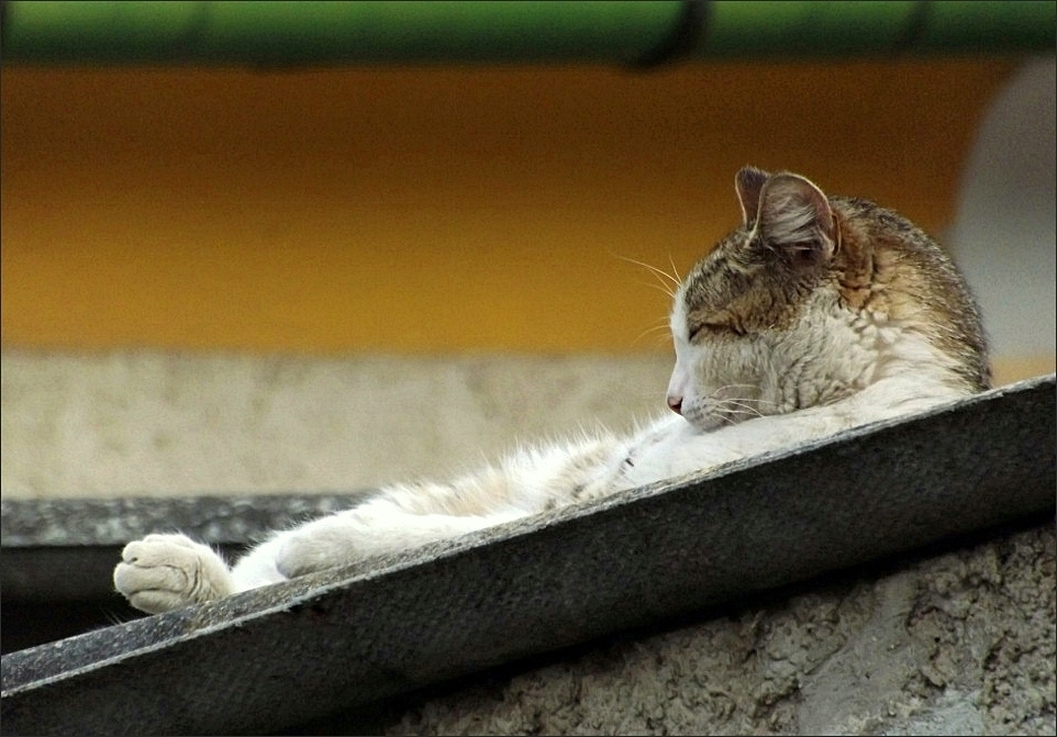 Macskaágy 1.