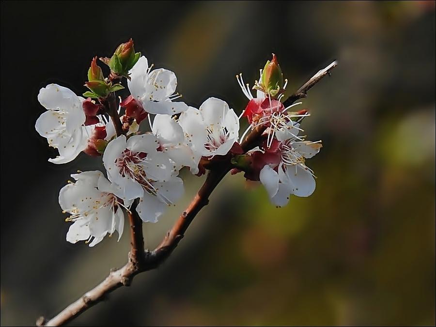 Tavaszi virágom 1.
