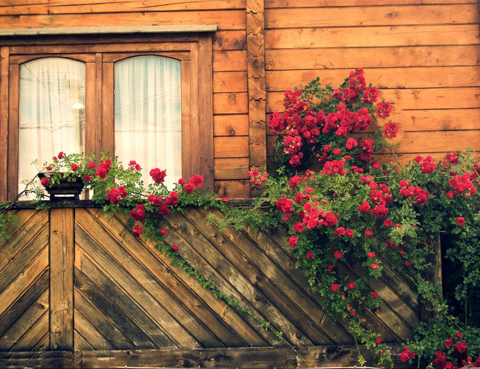 Rózsás csendélet...