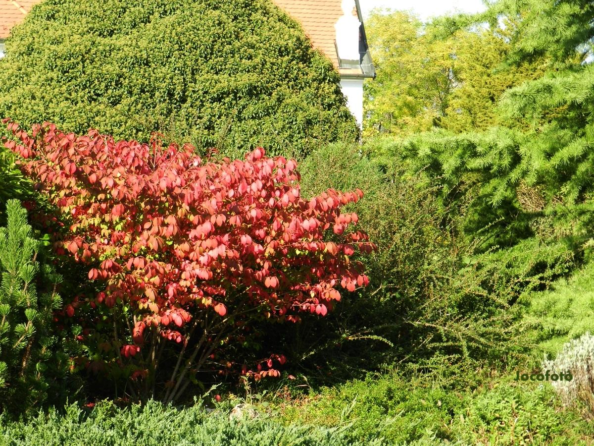 Őszi színek 1620