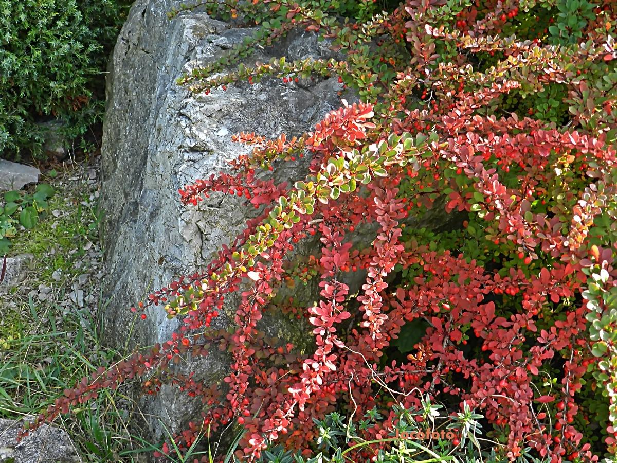Őszi színek 1621