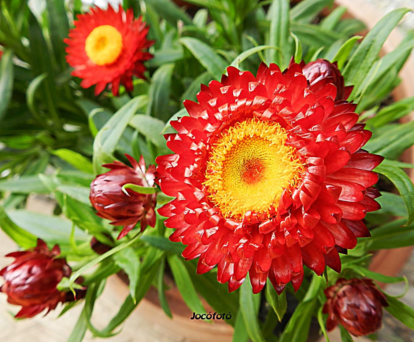 Virág 5481