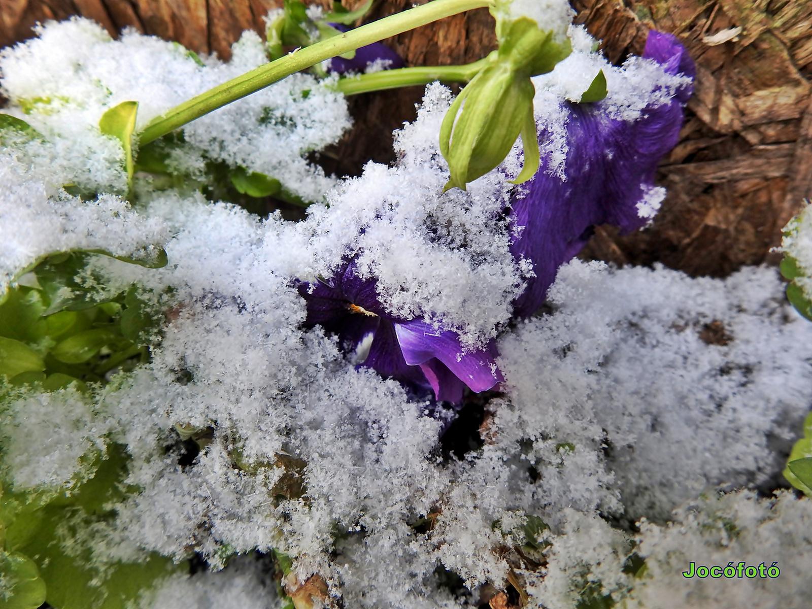 Első hó 1740