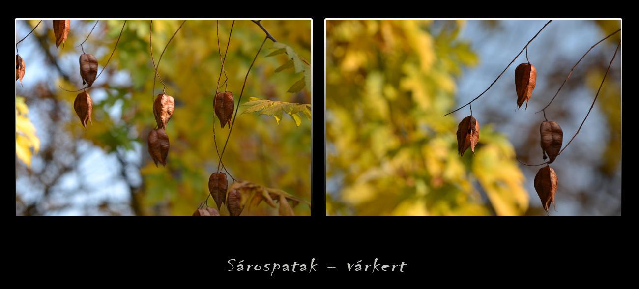 ősz dísze