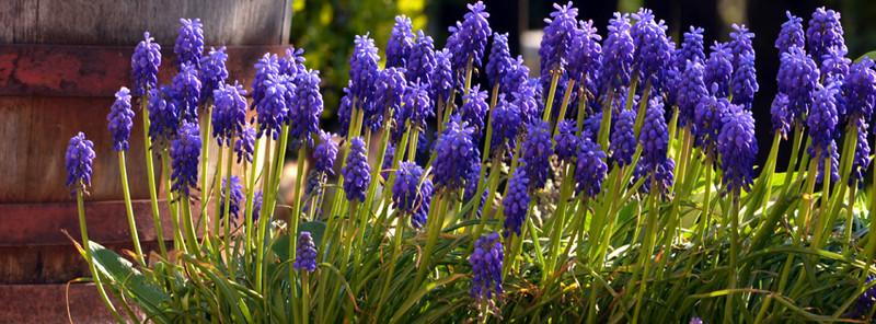 kék kert - 2