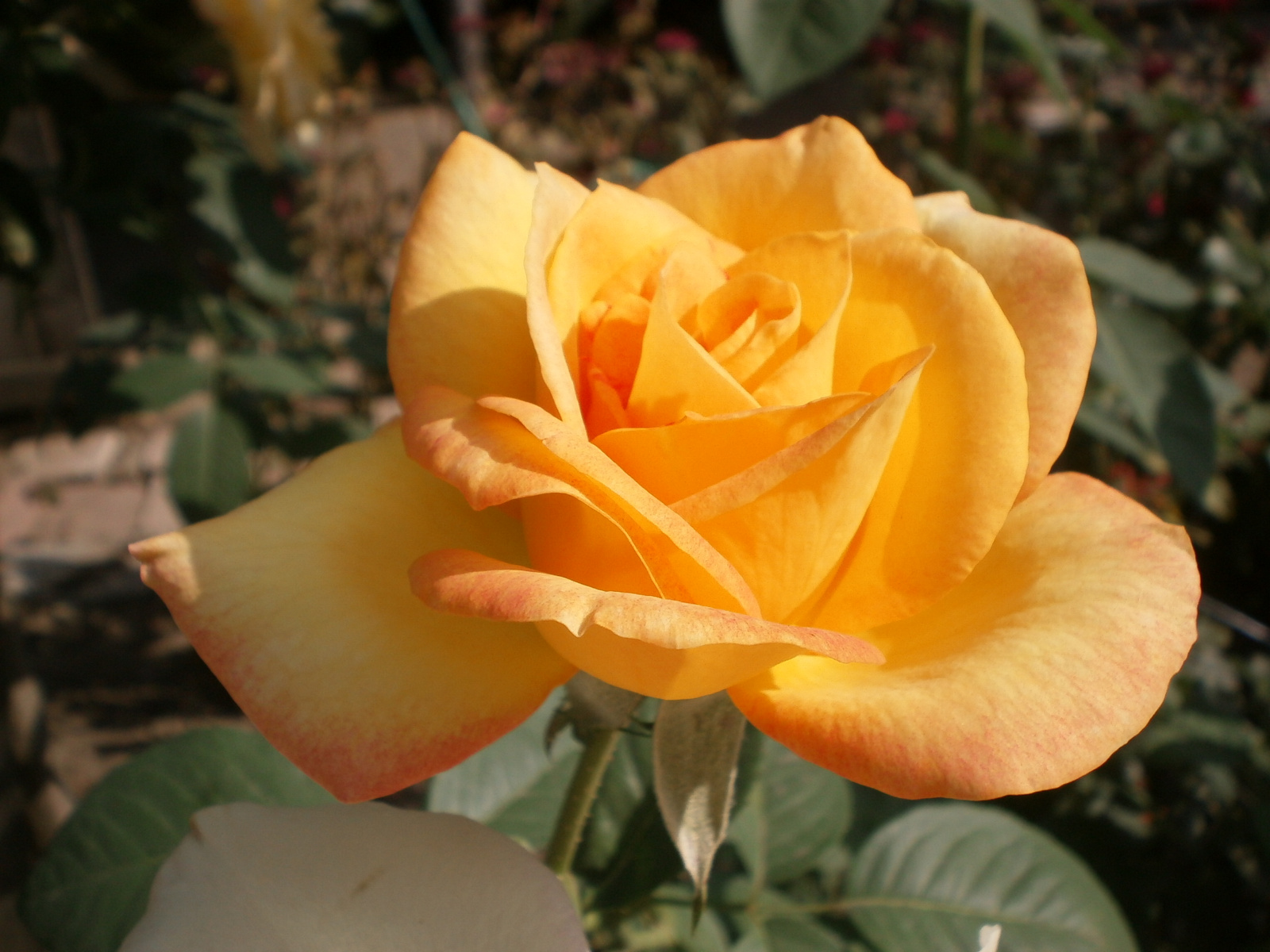 Narancs színben