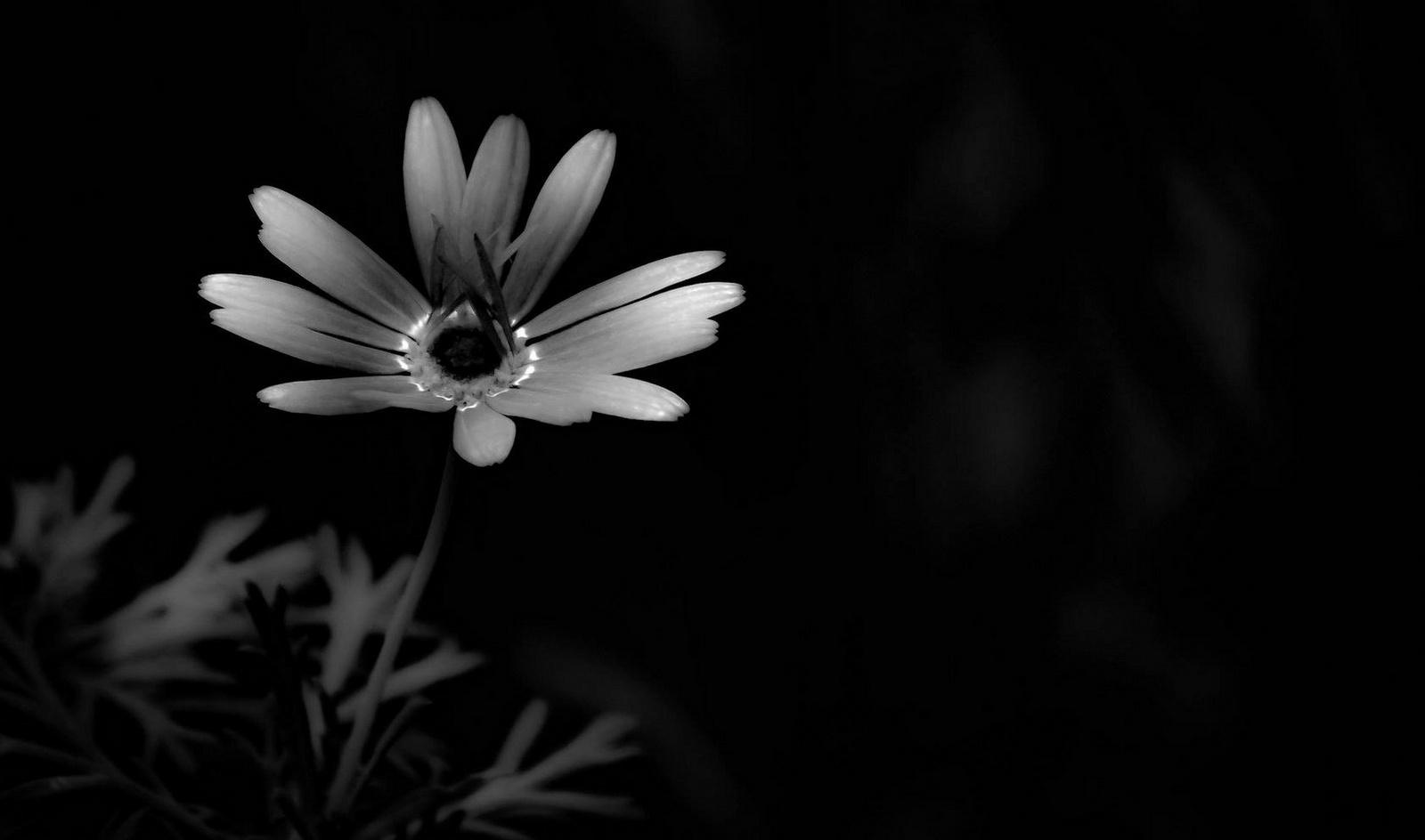 Egy szál virágBBBBBB