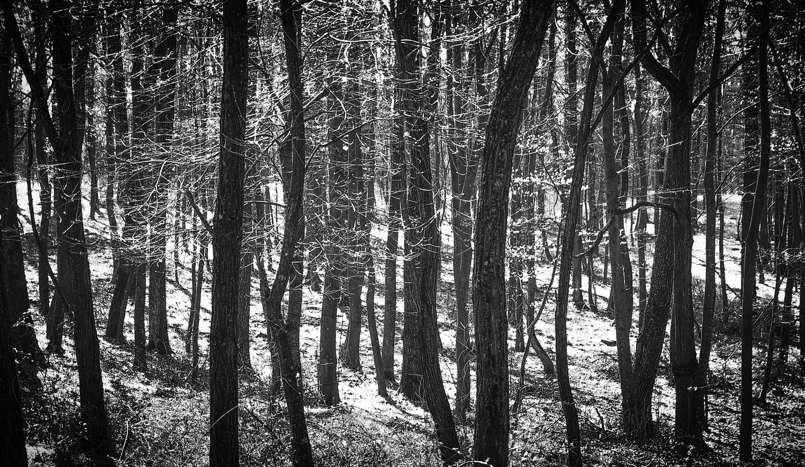 Erdő mélyén Karád FF