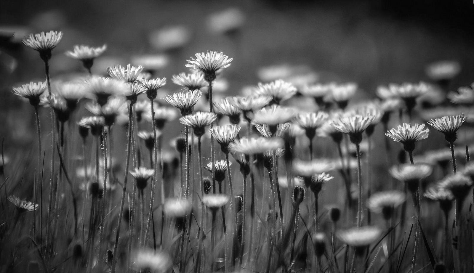 Virágok a réten