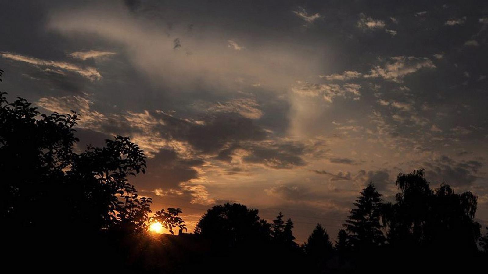 Napnyugta fák között
