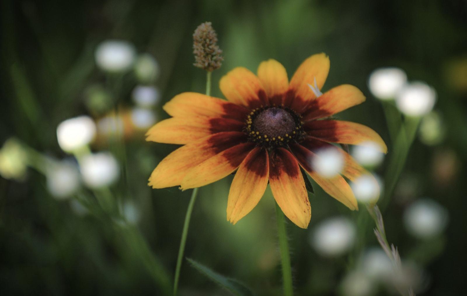 Virágok közt Veled lennék