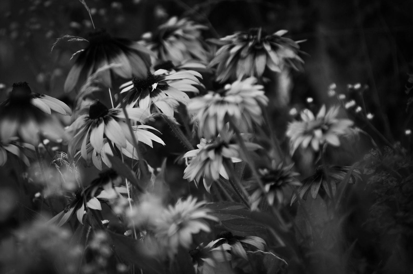 Virágok szélbenFFFFFFFF