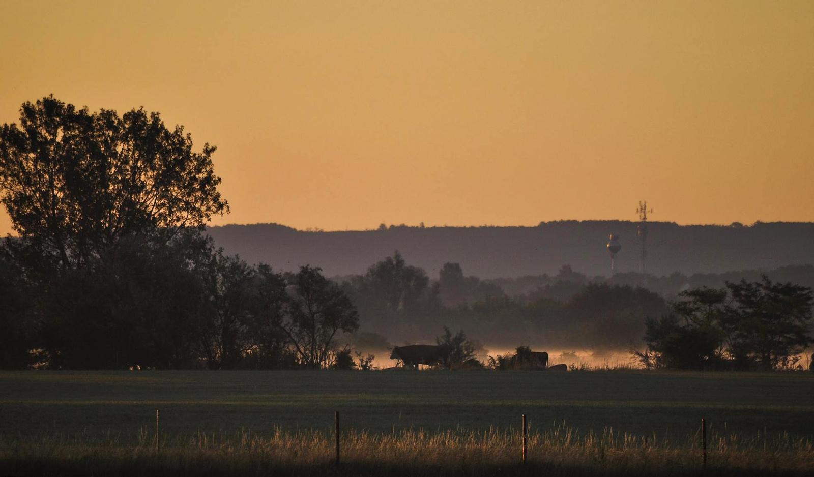 Hajnal a legelőnBBBBB