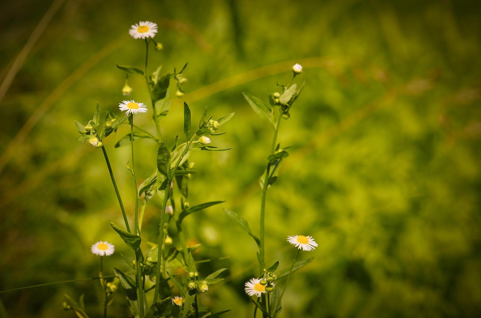 Pár szál virág