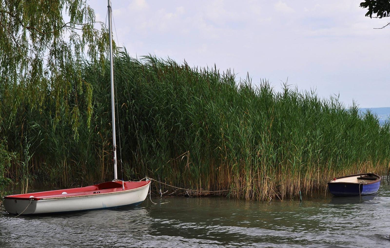 Csónakok a nádasban