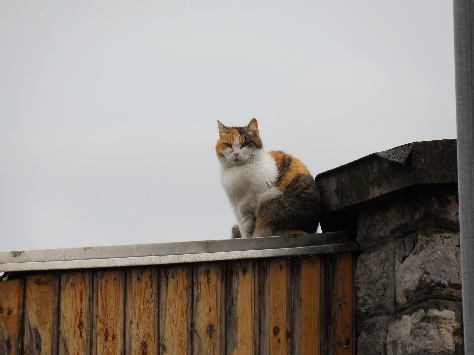 Macska a forró bádogtetőn