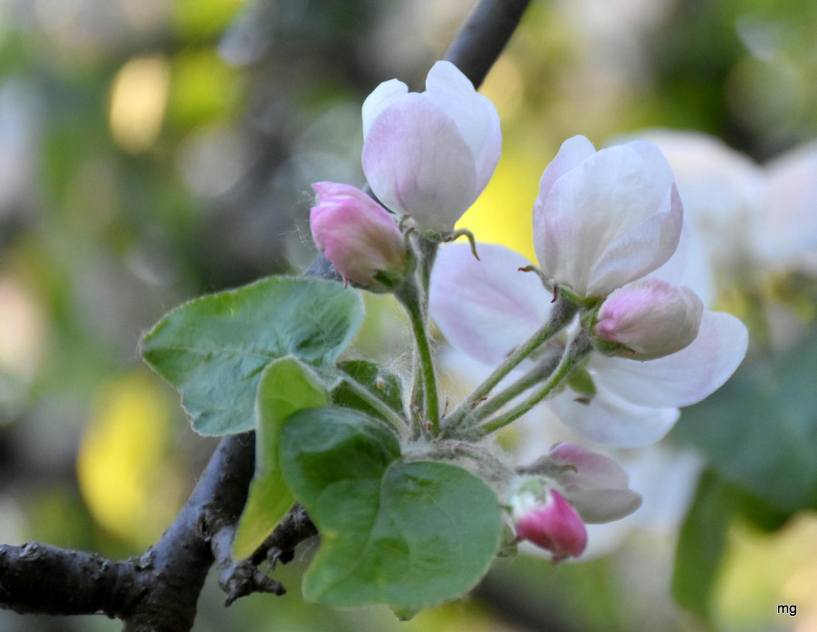Virágzásban