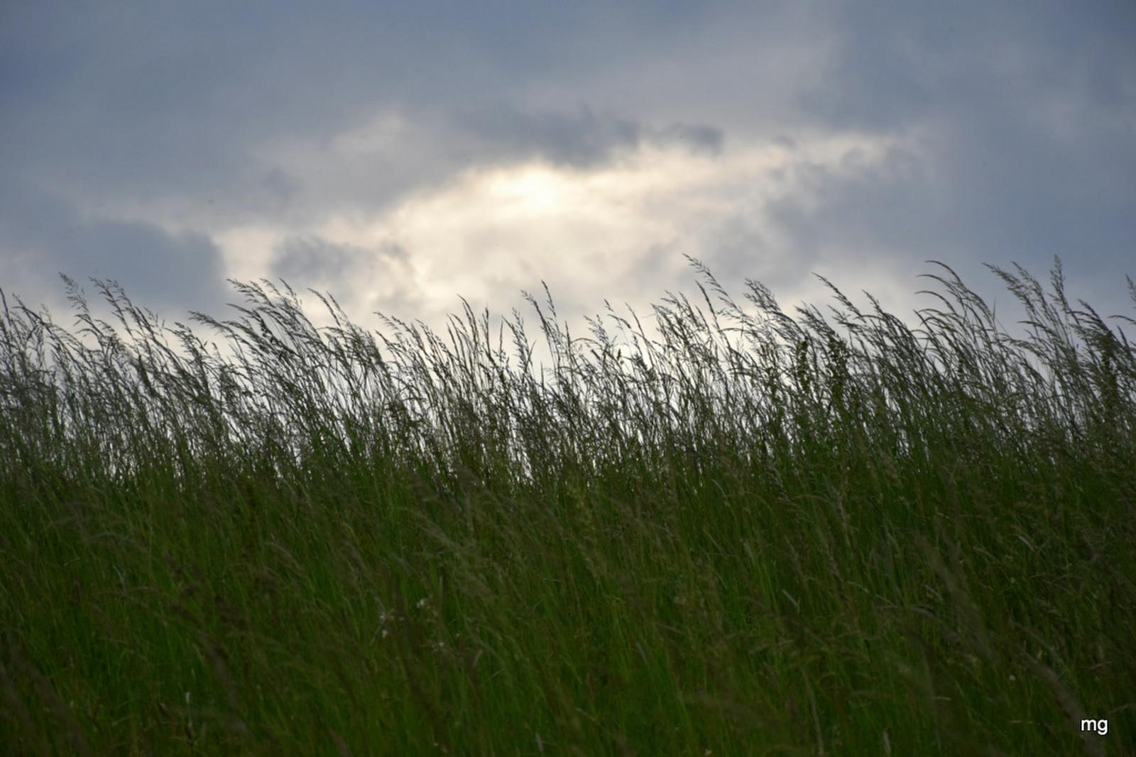 Égigérő fűszálak