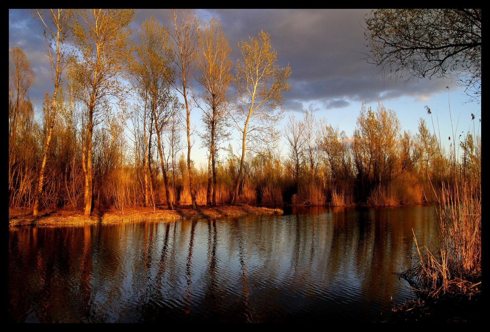 Fák a tóparton