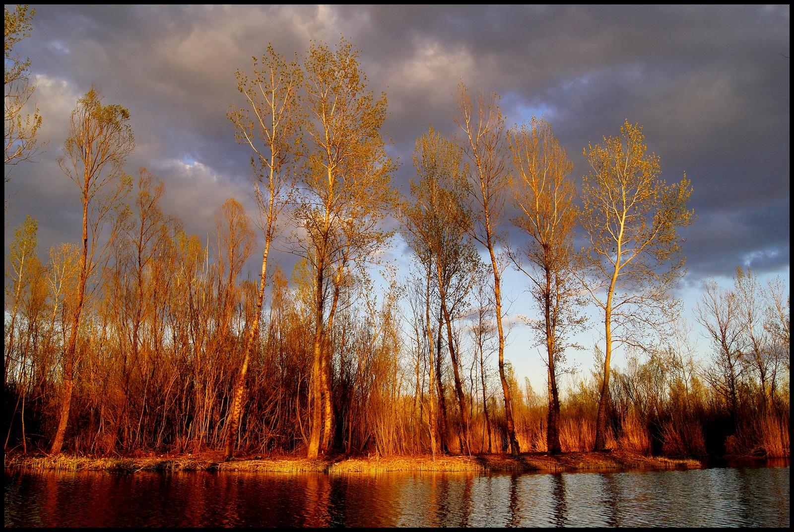 Fák a tóparton 4