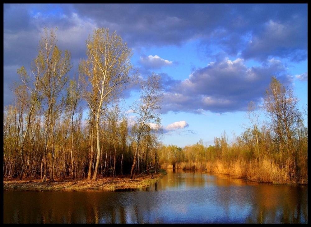 Fák a tóparton 3