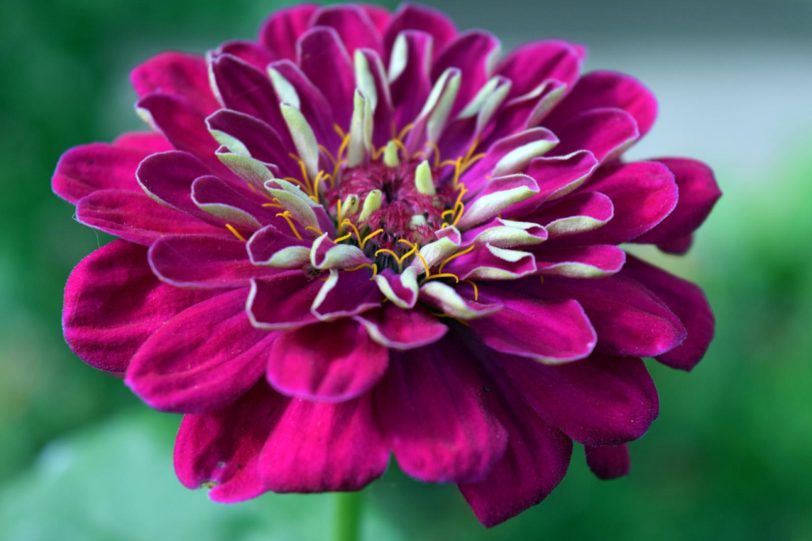 Őszi kerti virágok 1