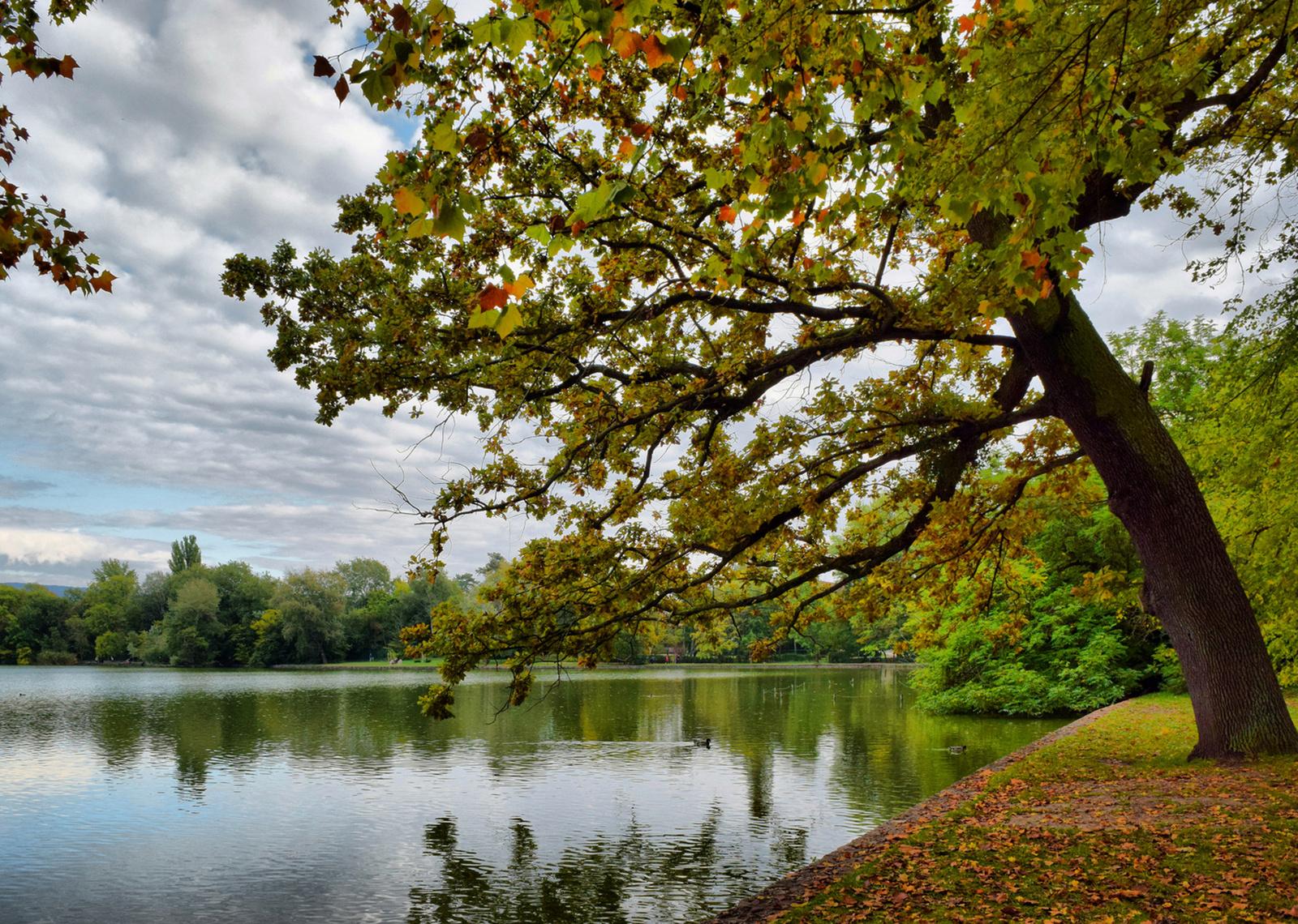 Cseke-tavi ősz