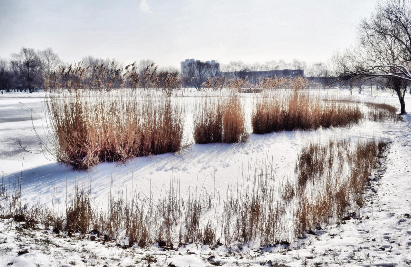 Téli tóparton