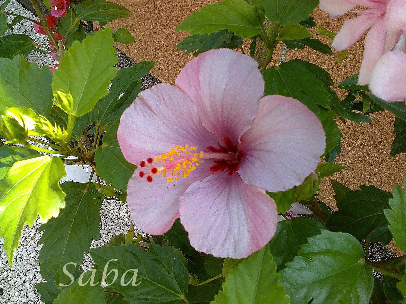 Shaba 20140806295